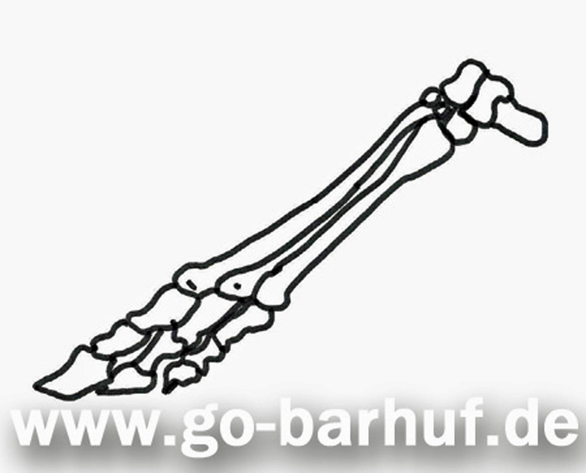 Manu Volk Go-barhuf.de - Anatomie der Gliedmaße